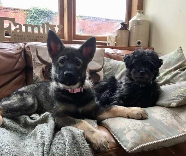 Customers Dog - Helen - Meda and Monty